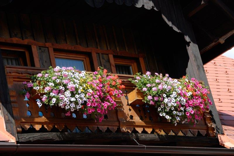 Blumen_3A.jpg