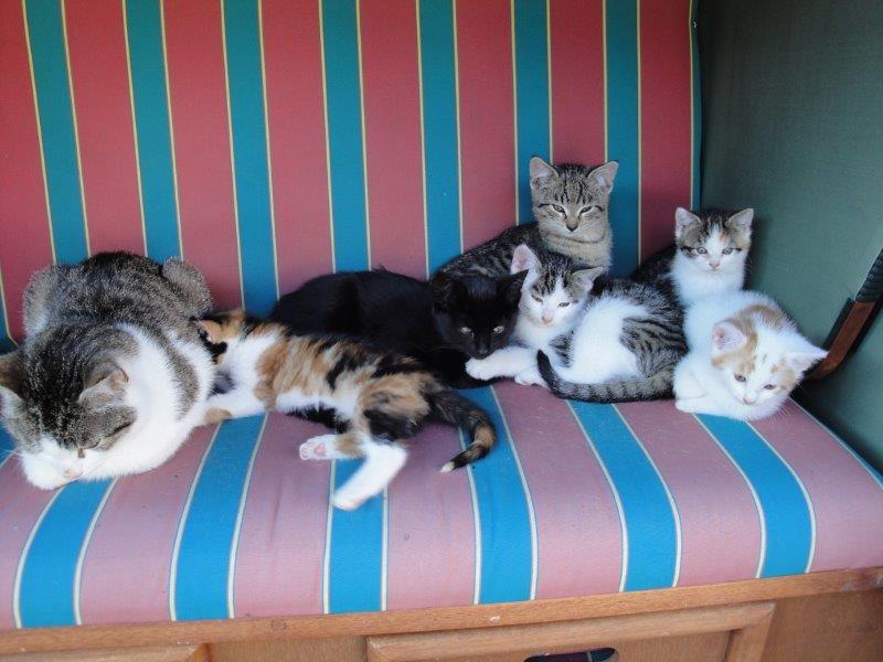 Katzen_1A.jpg
