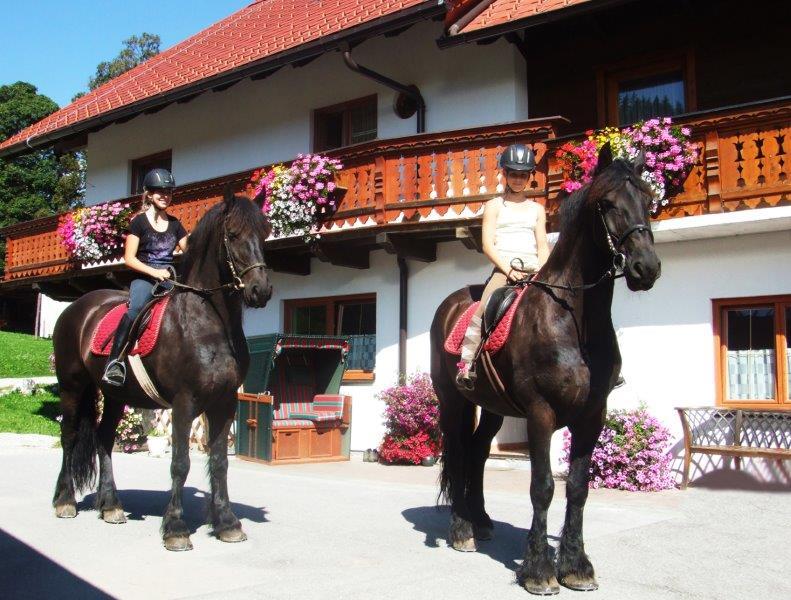 pferde_1A.jpg