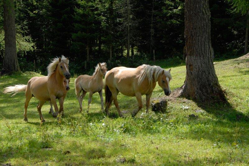pferde_3A.jpg